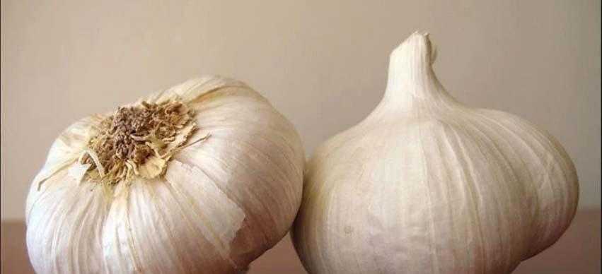 Garlic and Inflammation
