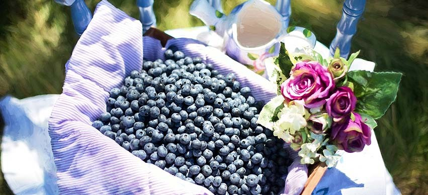 Blueberries - Food to improve your Eyesight