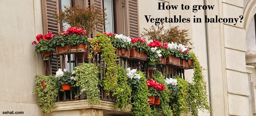 how to grow vegetables in balcony?