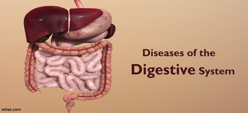 Most Common Diseases of the Digestive System