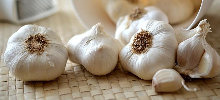 Garlic Healing Properties