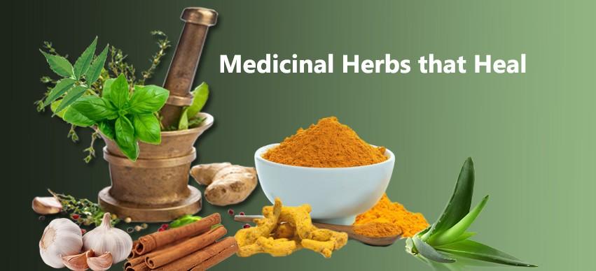 medicinal herbs that heal