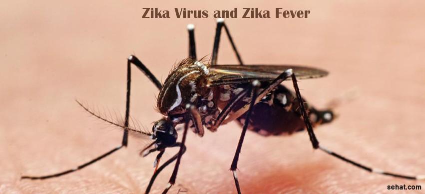 Zika virus and Zika Fever