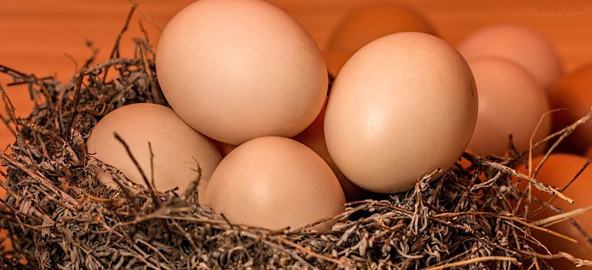 Eggs High in Vitamin B-12
