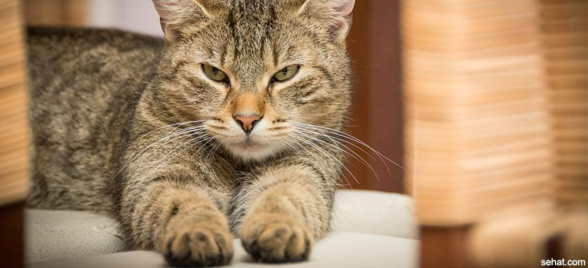 Cat scratch disease Causes, Symptoms and Treatment