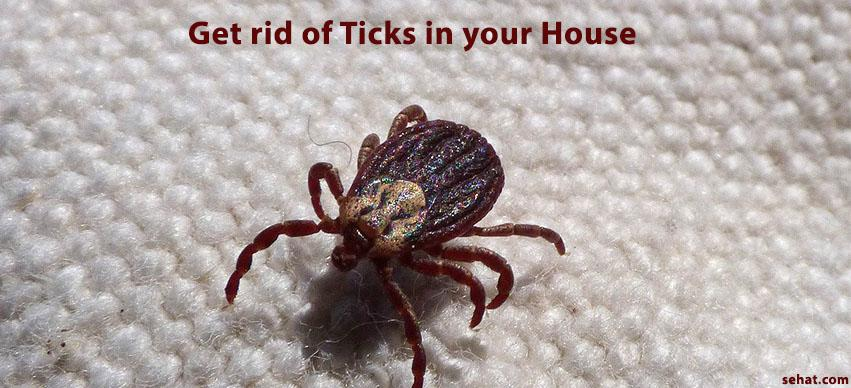 Get rid of Ticks in your House