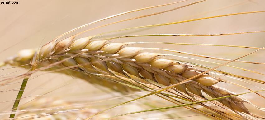 Food That Cause Painful Gas - Barley