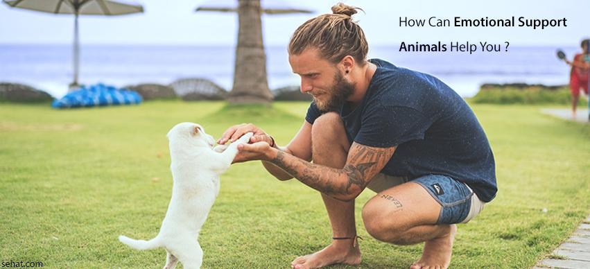 How can emotional support animals help you