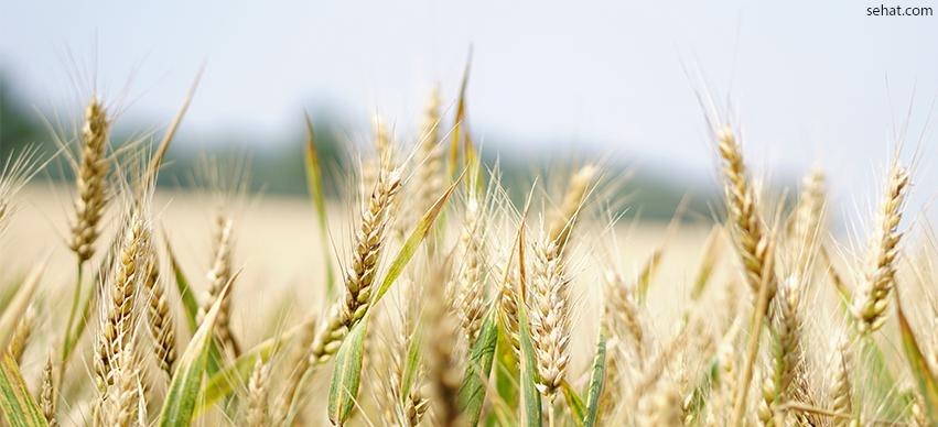 Wheat - common foods that cause allergies