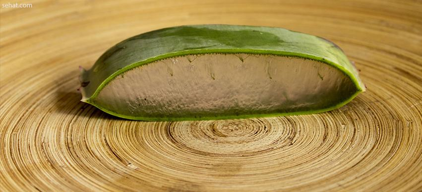 Aloe vera-Home remedy for skin itching in summer