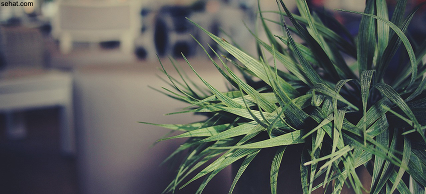 5 Plants That Improve Indoor Air Quality