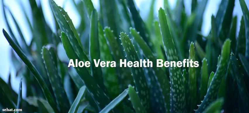 Benefits of Aloe Vera and Aloe Vera Juice