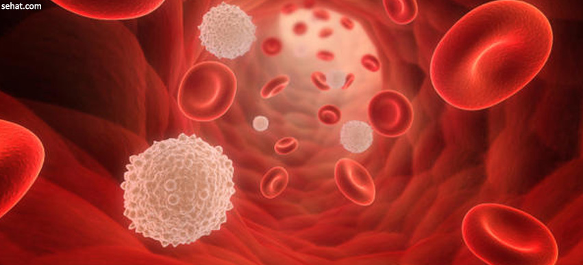 Deciphering Your Complete Blood Picture