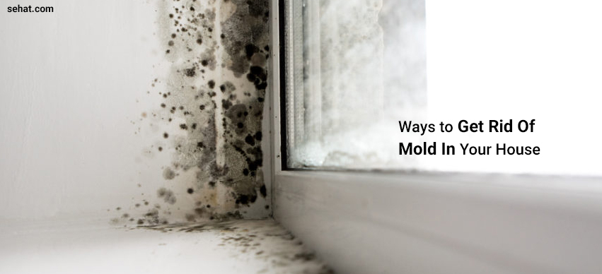 How To Rid Your Home Of Mold?
