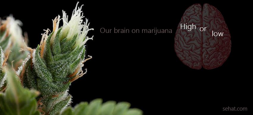 The Deadly Marijuana Effects on The Brain
