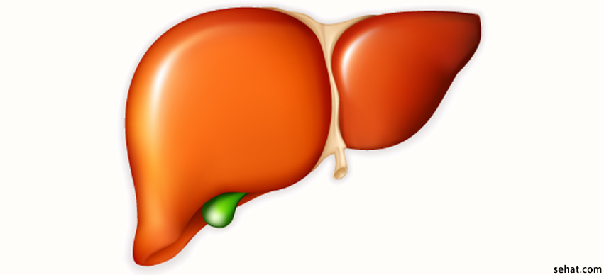 World Liver Day: Understanding the Liver and How to Keep it Healthy