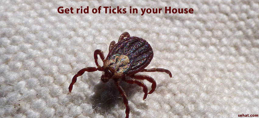 Your Guide To Get Rid Of Ticks in Your House for This Summer Without Hassles