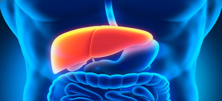 Your Liver and How it Works