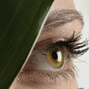 Blindness can be cured by transplanting photoreceptor cells