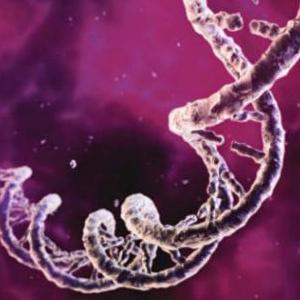 Mitochondrial mutation a major cause for speeding up the aging process