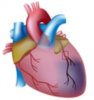 Pilot program in Tamil Nadu focuses on acute care of ST-elevation myocardial infarction