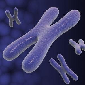 The Female X Chromosome contributes to Sperm production in Male