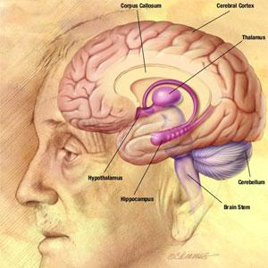 Want to slow down ageing of brain? Learn a new language, suggests new study